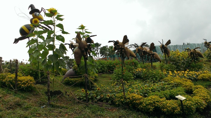 Benny's Sunflower Farm
