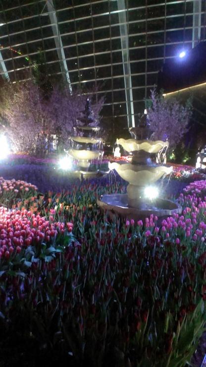 Tulipmania - Rediscovered (2016)