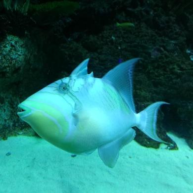SEA Aquarium, ResortsWorld Sentosa, Singapore