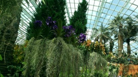 Orchid Extravaganza - Flower Dome, Garden by the Bay SG