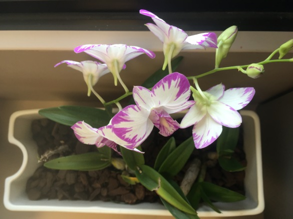 Orchid (with a new added plant)