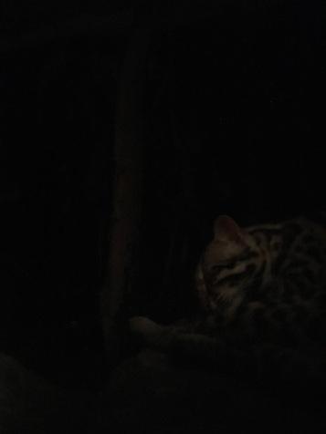 Leopard Trail, Night Safari