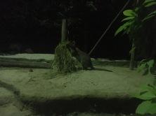 Wallaby Trail, Night Safari