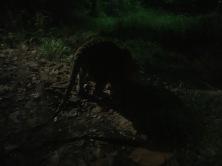 East Lodge Trail, Night Safari