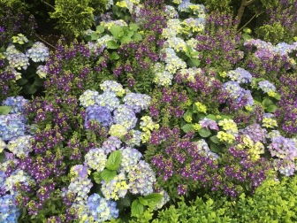 Blue Beauties - Gardens by the Bay Singapore