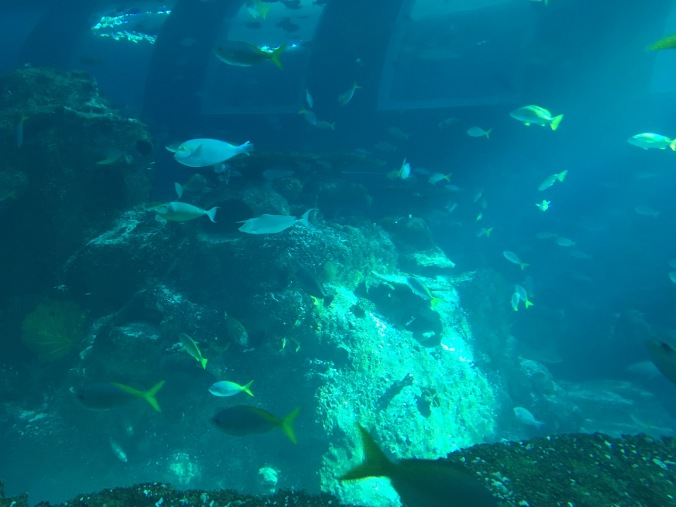Fishes from Ocean Dome view
