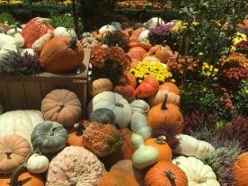 Autumn Harvest, Flower Dome, GBTB