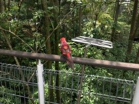 Jurong Bird Park - Lory Loft
